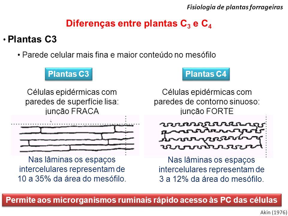 Akin (1976) Fisiologia de plantas forrageiras Diferenças entre plantas C 3 e C 4 Plantas C3 Parede celular mais fina e maior conteúdo no mesófilo Plan