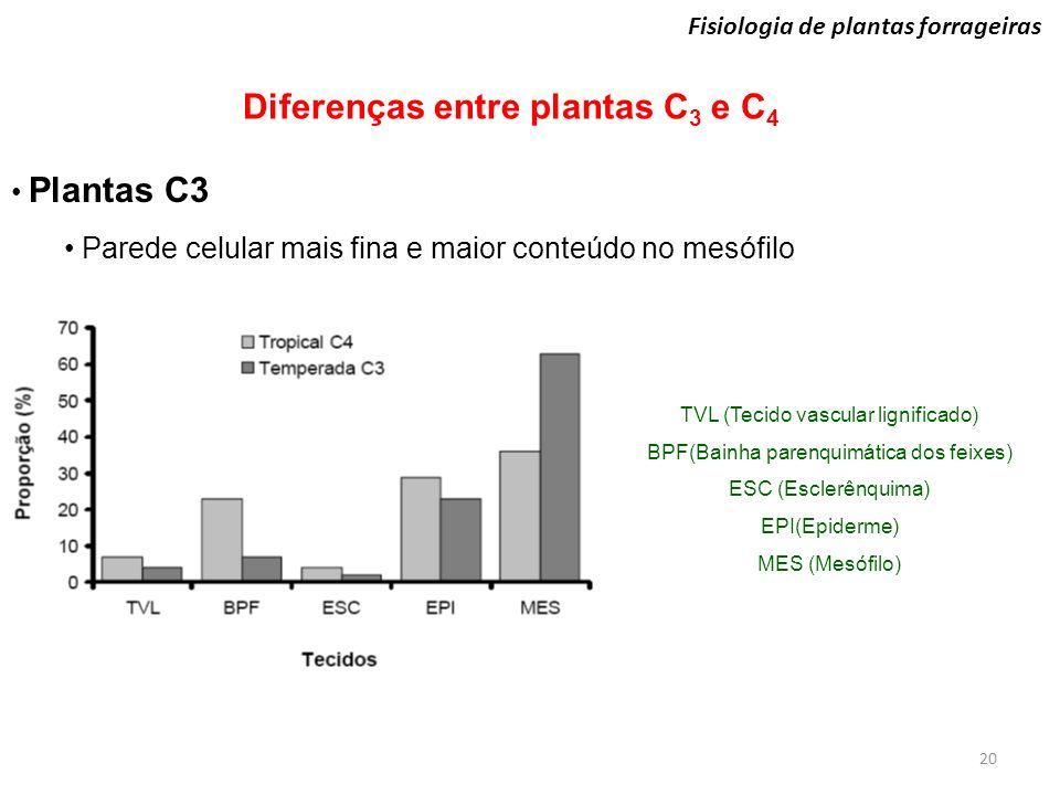 20 Fisiologia de plantas forrageiras Diferenças entre plantas C 3 e C 4 Plantas C3 Parede celular mais fina e maior conteúdo no mesófilo TVL (Tecido v