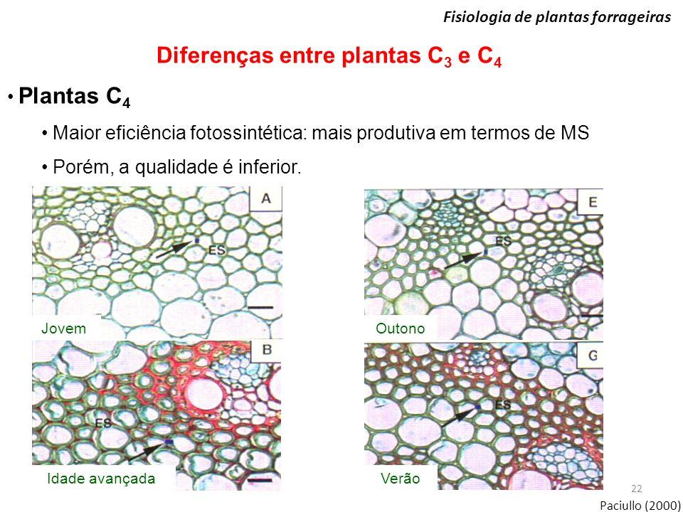 22 Fisiologia de plantas forrageiras Diferenças entre plantas C 3 e C 4 Plantas C 4 Maior eficiência fotossintética: mais produtiva em termos de MS Po
