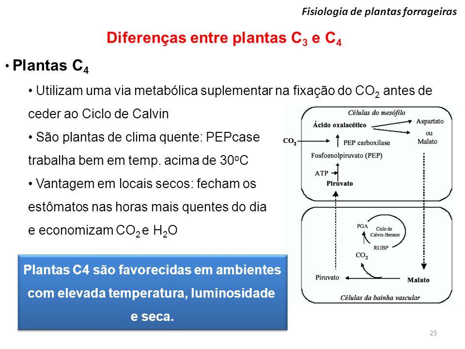 25 Fisiologia de plantas forrageiras Diferenças entre plantas C 3 e C 4 Plantas C 4 Utilizam uma via metabólica suplementar na fixação do CO 2 antes d
