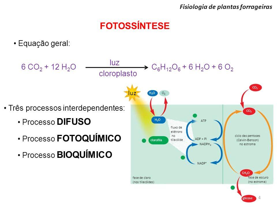 FOTOSSÍNTESE Fisiologia de plantas forrageiras Equação geral: 6 CO 2 + 12 H 2 O C 6 H 12 O 6 + 6 H 2 O + 6 O 2 luz cloroplasto Três processos interdep