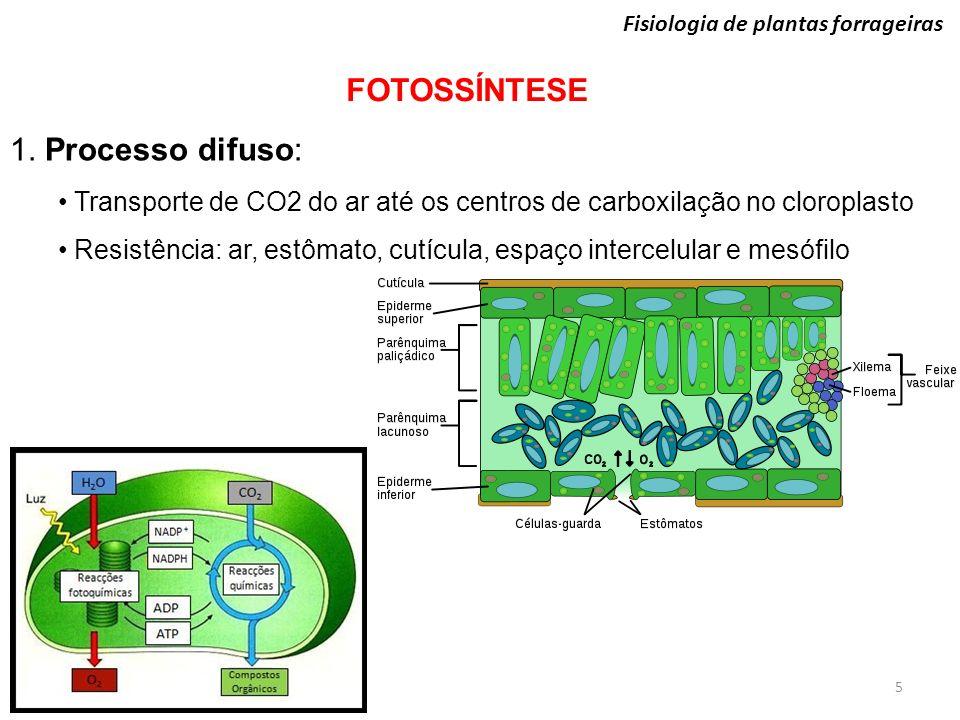Fisiologia de plantas forrageiras FOTOSSÍNTESE 1. Processo difuso: Transporte de CO2 do ar até os centros de carboxilação no cloroplasto Resistência: