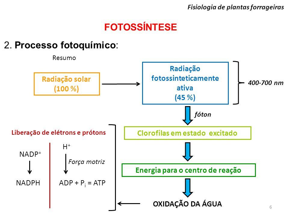 Radiação solar (100 %) Radiação fotossinteticamente ativa (45 %) fóton Clorofilas em estado excitado Energia para o centro de reação OXIDAÇÃO DA ÁGUA