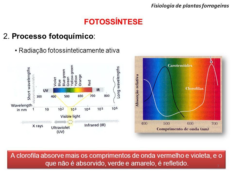 Fisiologia de plantas forrageiras FOTOSSÍNTESE 2. Processo fotoquímico: Radiação fotossinteticamente ativa A clorofila absorve mais os comprimentos de