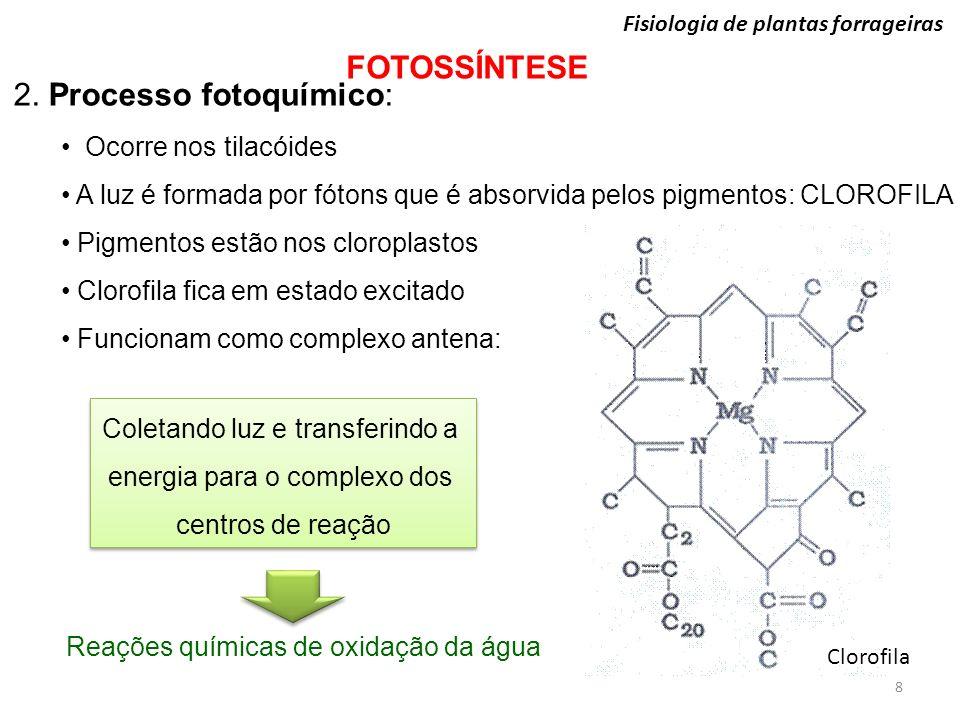 Fisiologia de plantas forrageiras FOTOSSÍNTESE 2. Processo fotoquímico: Ocorre nos tilacóides A luz é formada por fótons que é absorvida pelos pigment