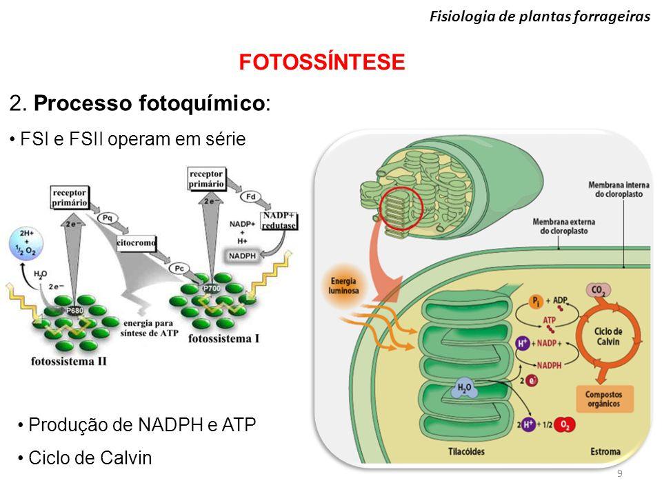 9 Fisiologia de plantas forrageiras FOTOSSÍNTESE 2. Processo fotoquímico: FSI e FSII operam em série Produção de NADPH e ATP Ciclo de Calvin