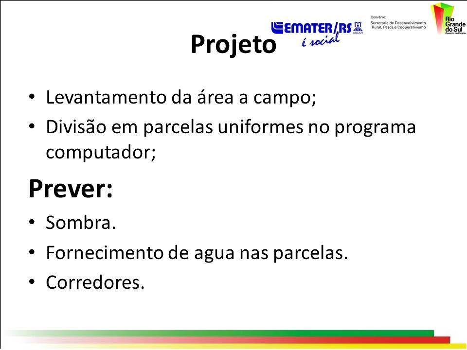 Projeto Levantamento da área a campo; Divisão em parcelas uniformes no programa computador; Prever: Sombra. Fornecimento de agua nas parcelas. Corredo