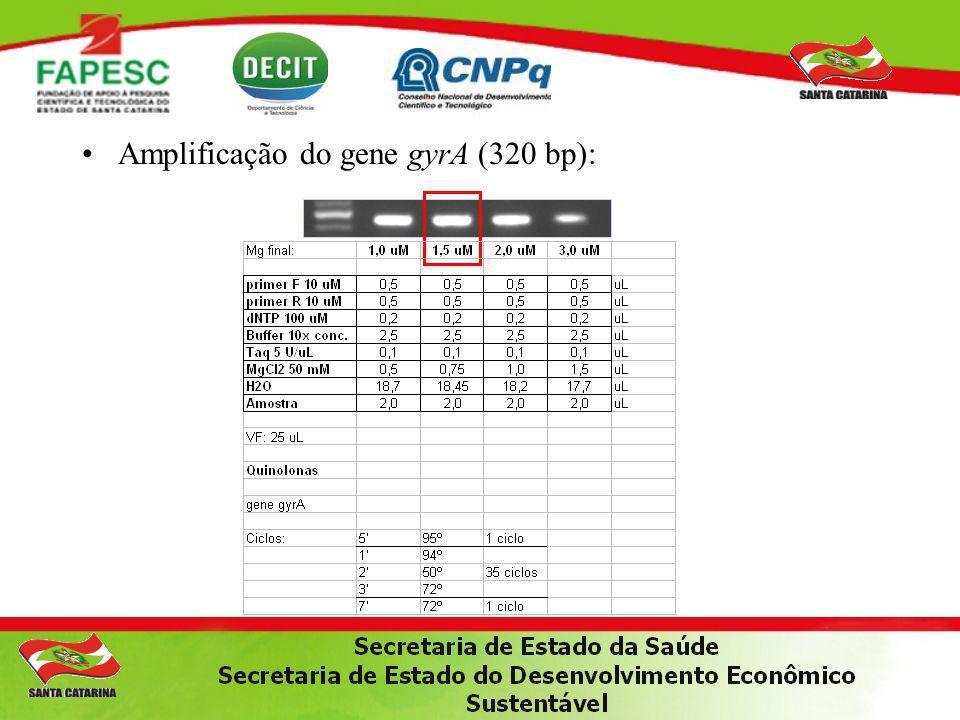 Amplificação do gene gyrA (320 bp):