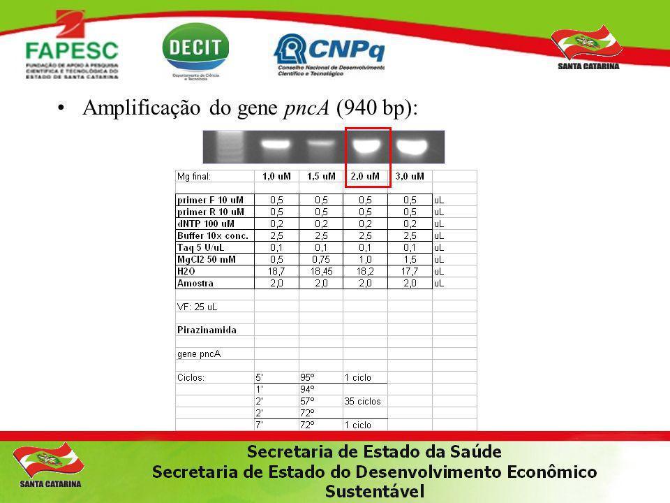 Amplificação do gene pncA (940 bp):