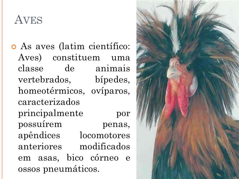 A VES As aves (latim científico: Aves) constituem uma classe de animais vertebrados, bípedes, homeotérmicos, ovíparos, caracterizados principalmente p