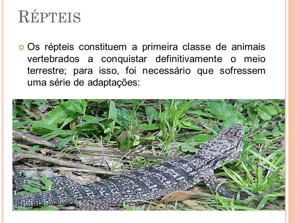 R ÉPTEIS Os répteis constituem a primeira classe de animais vertebrados a conquistar definitivamente o meio terrestre; para isso, foi necessário que s