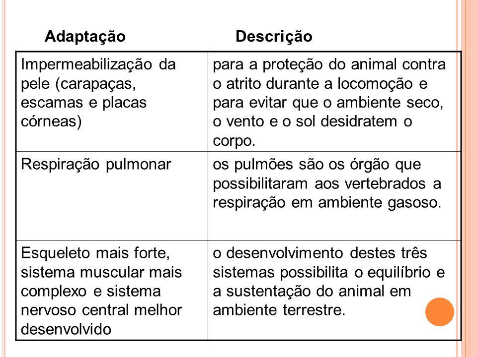 Impermeabilização da pele (carapaças, escamas e placas córneas) para a proteção do animal contra o atrito durante a locomoção e para evitar que o ambi