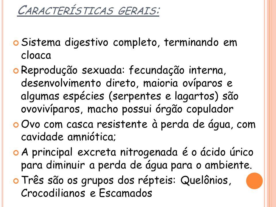 C ARACTERÍSTICAS GERAIS : Sistema digestivo completo, terminando em cloaca Reprodução sexuada: fecundação interna, desenvolvimento direto, maioria oví