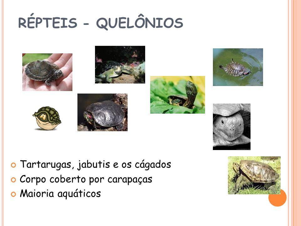 RÉPTEIS - QUELÔNIOS Tartarugas, jabutis e os cágados Corpo coberto por carapaças Maioria aquáticos