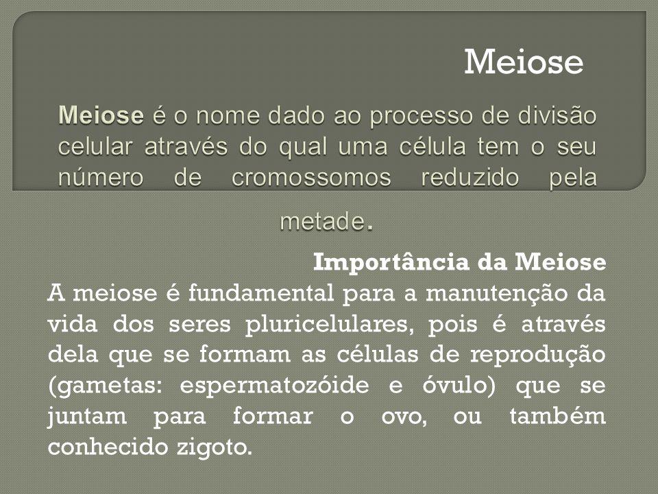Importância da Meiose A meiose é fundamental para a manutenção da vida dos seres pluricelulares, pois é através dela que se formam as células de repro