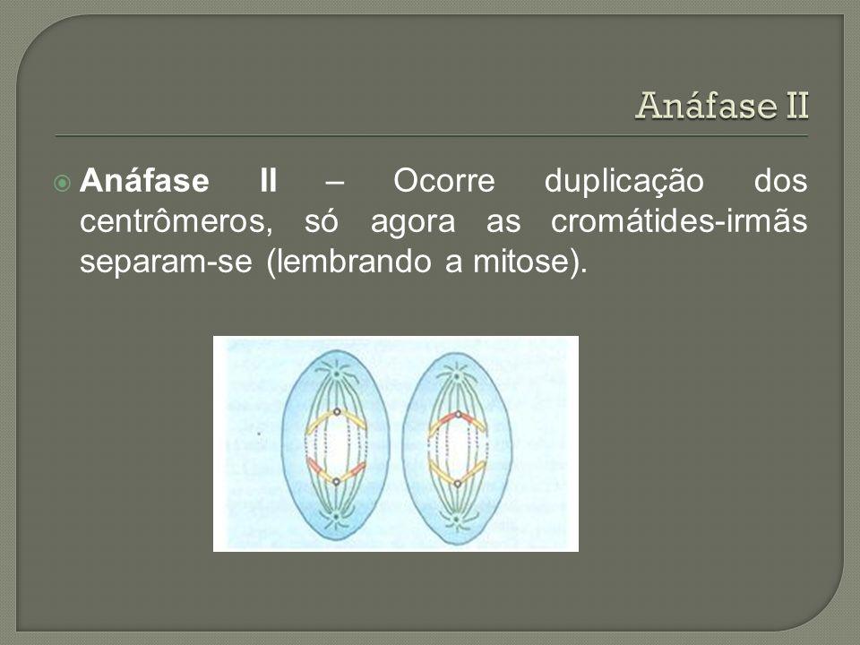 Anáfase II – Ocorre duplicação dos centrômeros, só agora as cromátides-irmãs separam-se (lembrando a mitose).