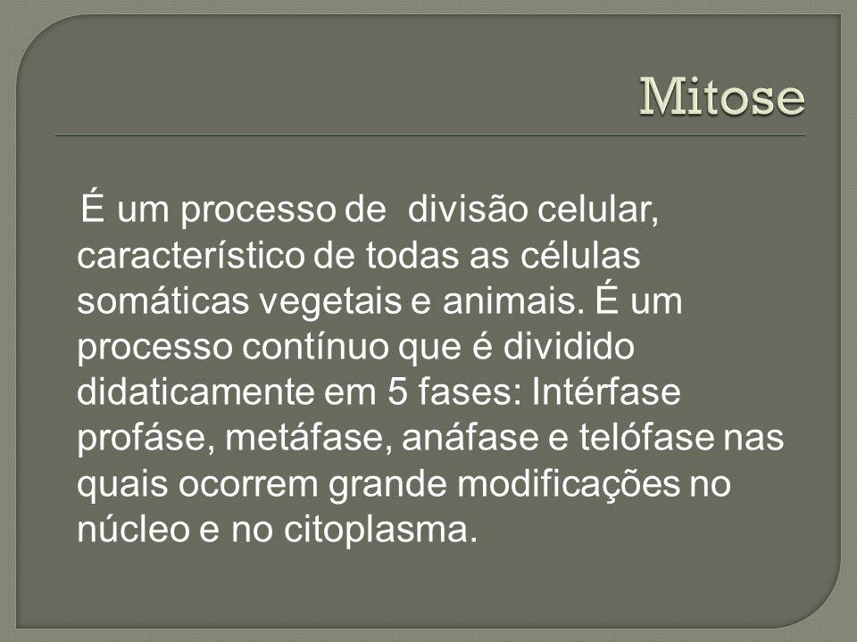 É um processo de divisão celular, característico de todas as células somáticas vegetais e animais. É um processo contínuo que é dividido didaticamente