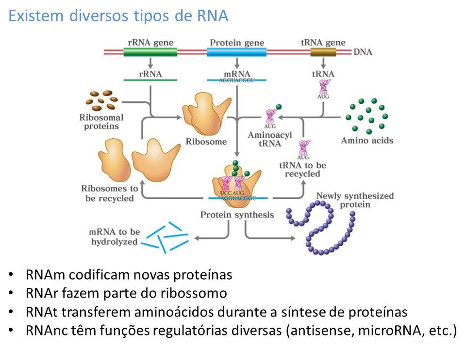 O RNAm contém as informações necessárias para gerar uma nova proteína Fita molde para a síntese de RNA Fita codificante A fita codificadora contém a sequência similar à sequência do RNAm (com T no lugar de U) A fita molde vai servir de referência para a síntese do RNAm