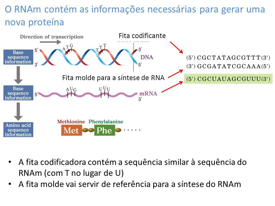 Modificação pós-transcricionais: 5´-cap O 5´cap é adicionado ao RNA no início da transcrição por um complexo enzimático Regula o transporte de RNA para fora do núcleo Evita degradação