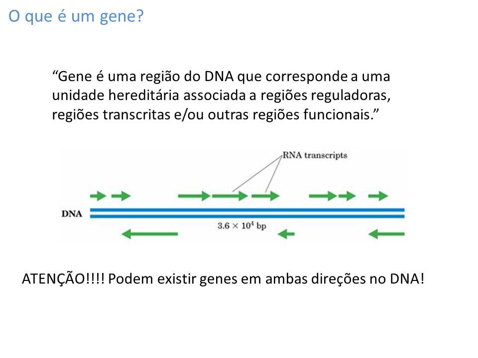 A RNA polimerase gera uma fita de RNA a partir do DNA Funciona como a DNA polimerase mas: Faz RNA.