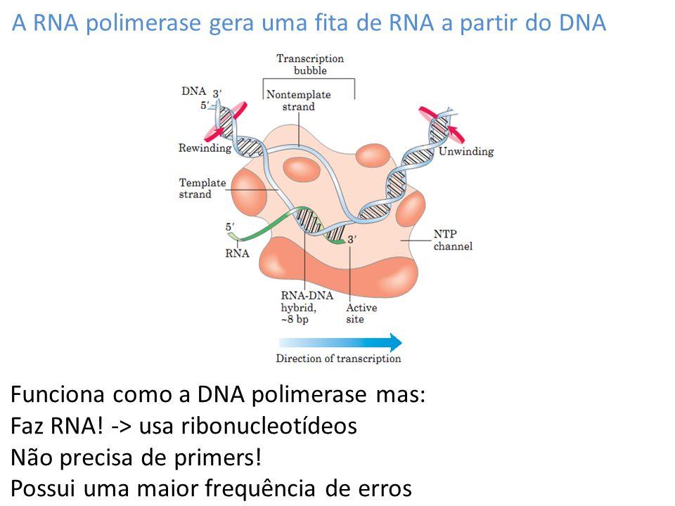 O ciclo de trancrição tem três fases Iniciação (1) alongamento (2) término (3) A iniciação da transcrição depende de promotores e outros elementos de regulação