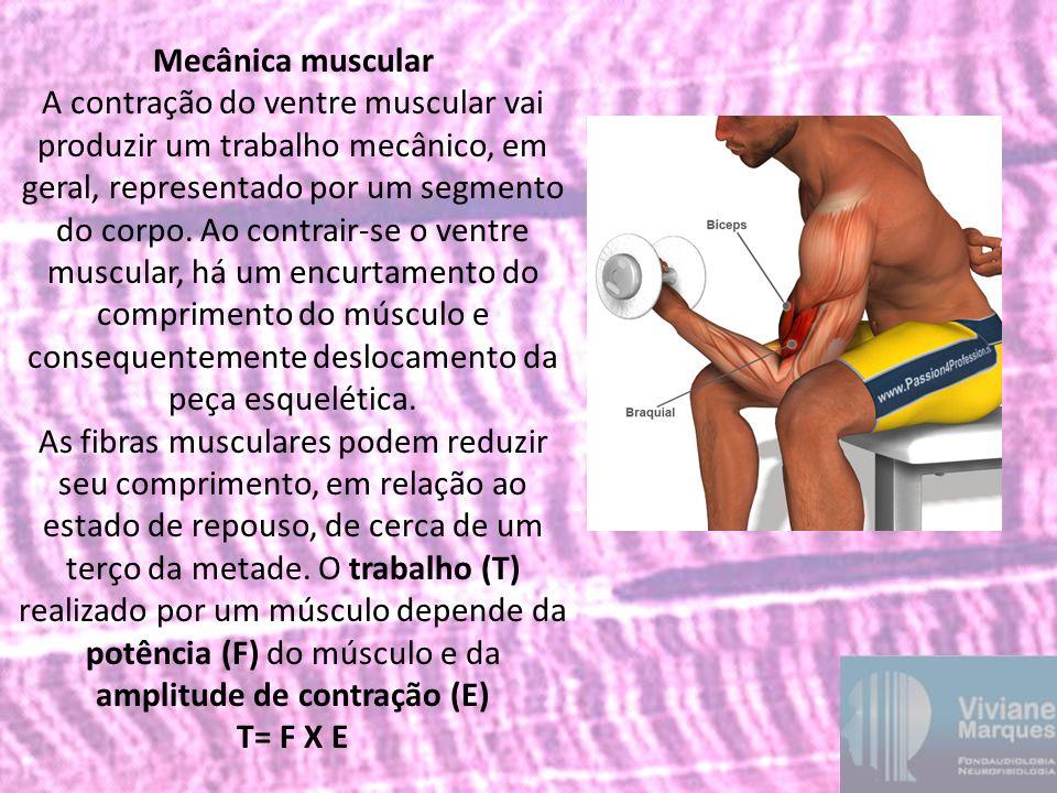 Mecânica muscular A contração do ventre muscular vai produzir um trabalho mecânico, em geral, representado por um segmento do corpo. Ao contrair-se o