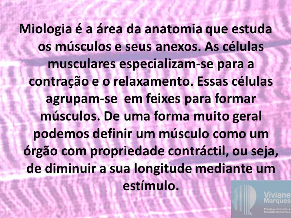 Miologia é a área da anatomia que estuda os músculos e seus anexos. As células musculares especializam-se para a contração e o relaxamento. Essas célu