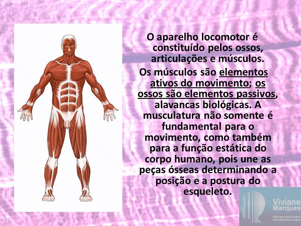 O aparelho locomotor é constituído pelos ossos, articulações e músculos. Os músculos são elementos ativos do movimento; os ossos são elementos passivo