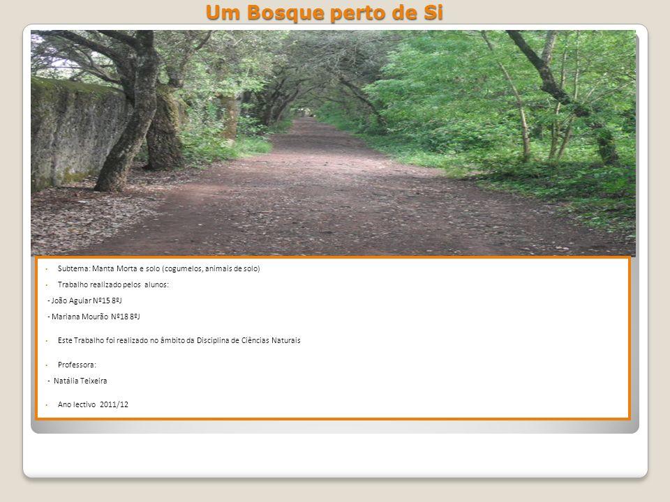 Um Bosque perto de Si Subtema: Manta Morta e solo (cogumelos, animais de solo) Trabalho realizado pelos alunos: - João Aguiar Nº15 8ºJ - Mariana Mourã