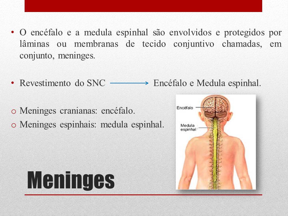 Meninges O encéfalo e a medula espinhal são envolvidos e protegidos por lâminas ou membranas de tecido conjuntivo chamadas, em conjunto, meninges. Rev