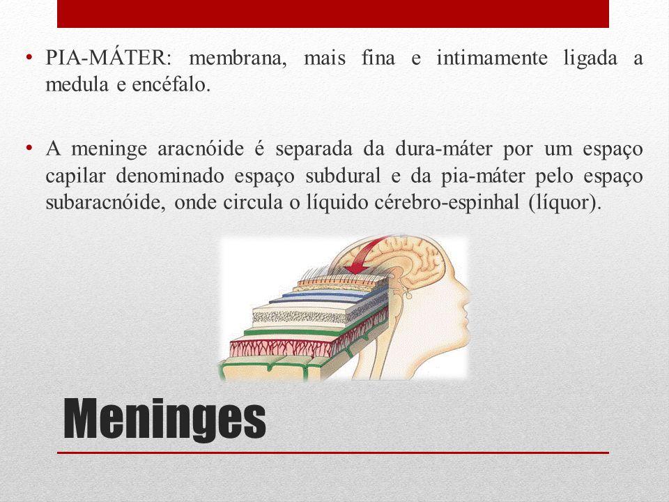 Meninges PIA-MÁTER: membrana, mais fina e intimamente ligada a medula e encéfalo. A meninge aracnóide é separada da dura-máter por um espaço capilar d