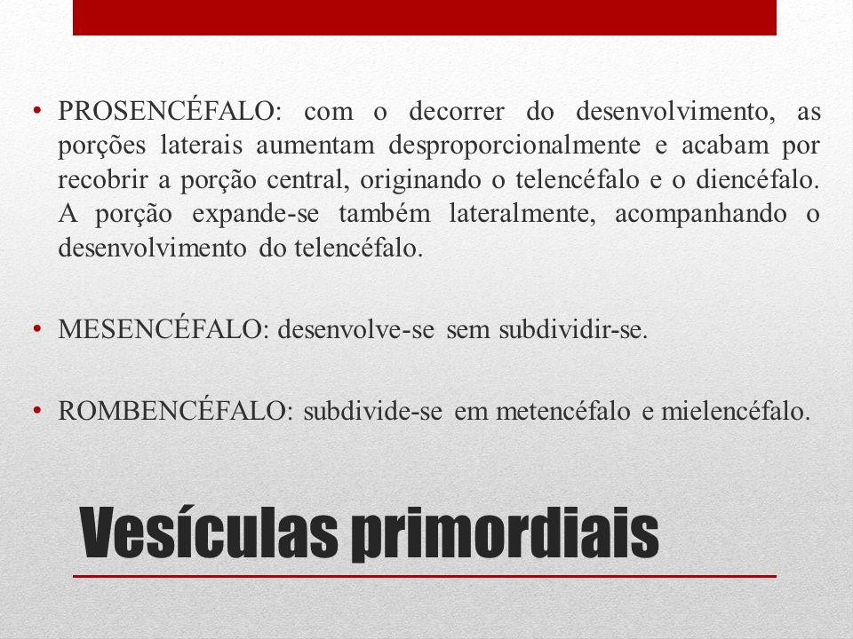 Vesículas primordiais PROSENCÉFALO: com o decorrer do desenvolvimento, as porções laterais aumentam desproporcionalmente e acabam por recobrir a porçã