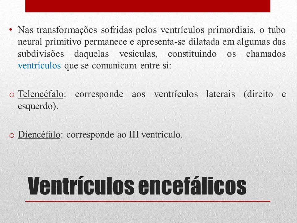 Ventrículos encefálicos Nas transformações sofridas pelos ventrículos primordiais, o tubo neural primitivo permanece e apresenta-se dilatada em alguma
