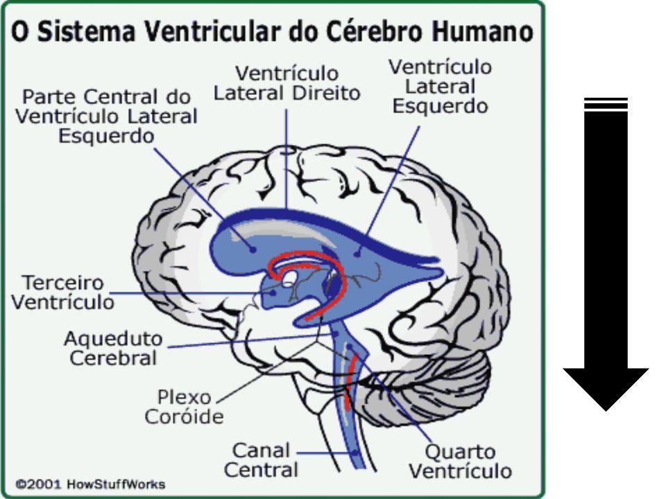 Líquor Líquido cefalorraquidiano, Líquido cérebro-espinhal ou Líquor (LCR).