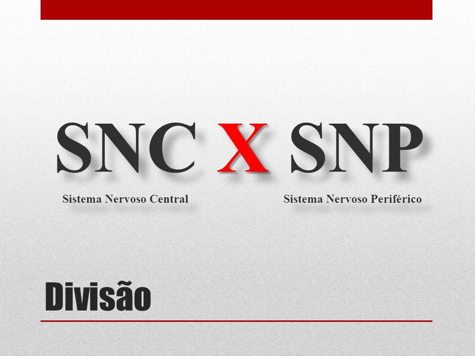 Divisão X SNC X SNP Sistema Nervoso Central Sistema Nervoso Periférico X SNC X SNP Sistema Nervoso Central Sistema Nervoso Periférico