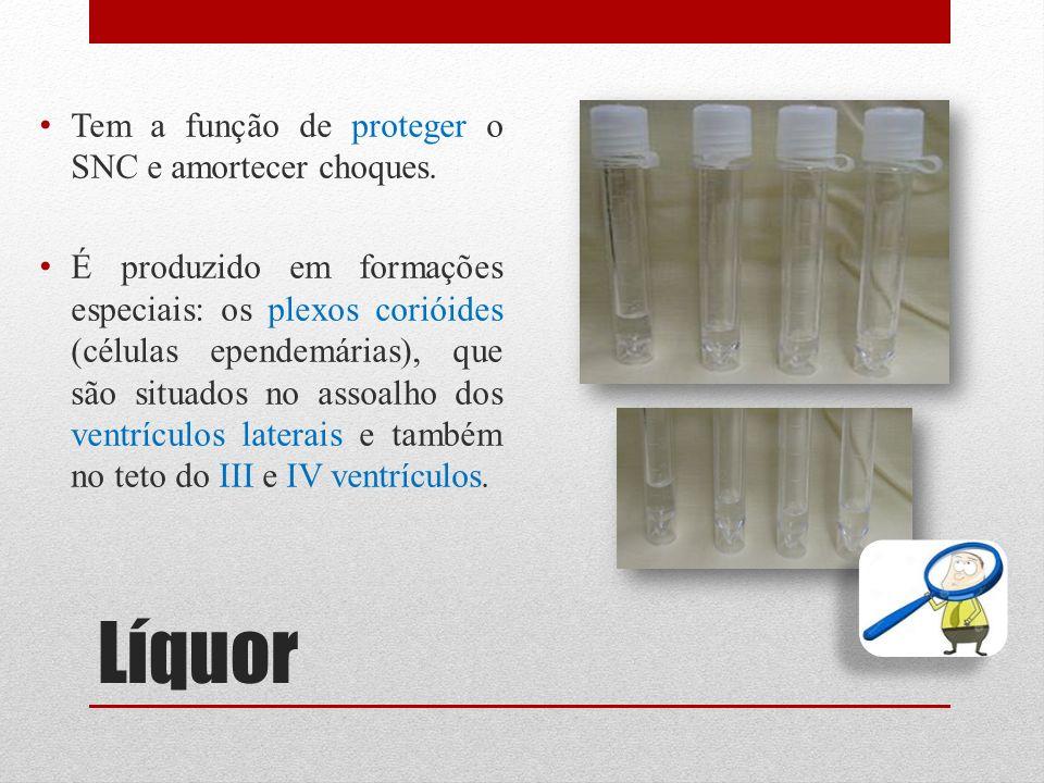 Líquor Tem a função de proteger o SNC e amortecer choques. É produzido em formações especiais: os plexos corióides (células ependemárias), que são sit