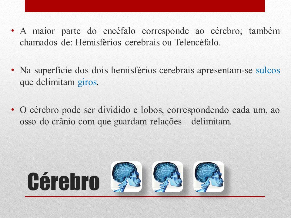 Cérebro A maior parte do encéfalo corresponde ao cérebro; também chamados de: Hemisférios cerebrais ou Telencéfalo. Na superfície dos dois hemisférios