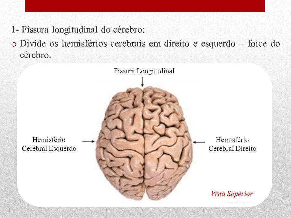 1- Fissura longitudinal do cérebro: o Divide os hemisférios cerebrais em direito e esquerdo – foice do cérebro. Hemisfério Cerebral Direito Hemisfério