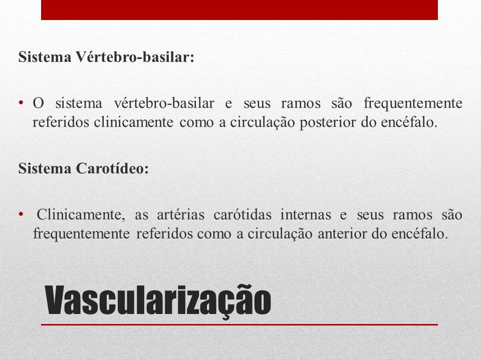 Vascularização Sistema Vértebro-basilar: O sistema vértebro-basilar e seus ramos são frequentemente referidos clinicamente como a circulação posterior