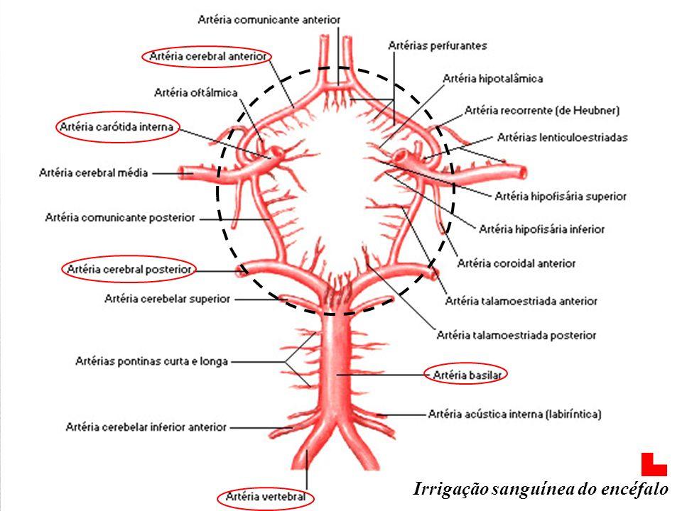 Irrigação sanguínea do encéfalo