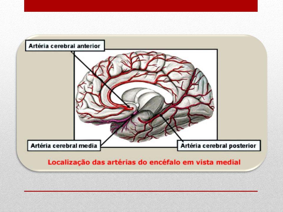 Vascularização venosa As veias do encéfalo, de um modo geral, não acompanham as artérias, sendo maiores e mais calibrosas do que elas.