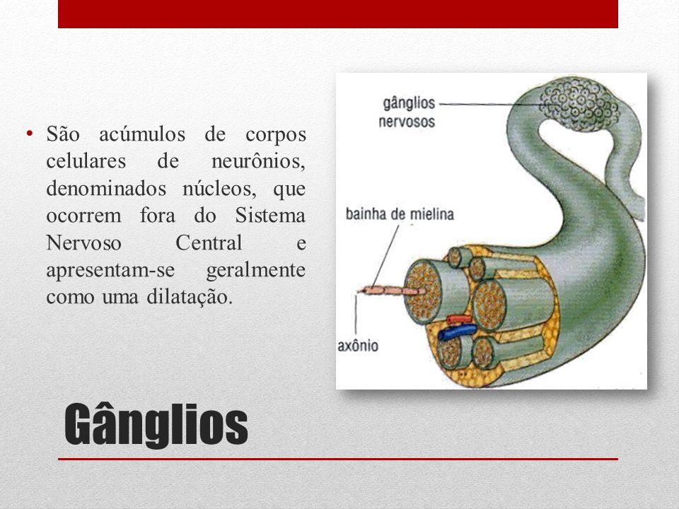 Gânglios São acúmulos de corpos celulares de neurônios, denominados núcleos, que ocorrem fora do Sistema Nervoso Central e apresentam-se geralmente co
