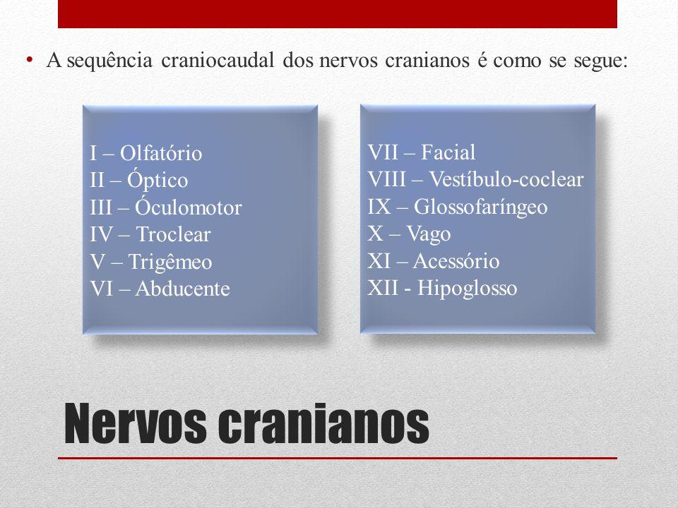 Nervos cranianos A sequência craniocaudal dos nervos cranianos é como se segue: I – Olfatório II – Óptico III – Óculomotor IV – Troclear V – Trigêmeo