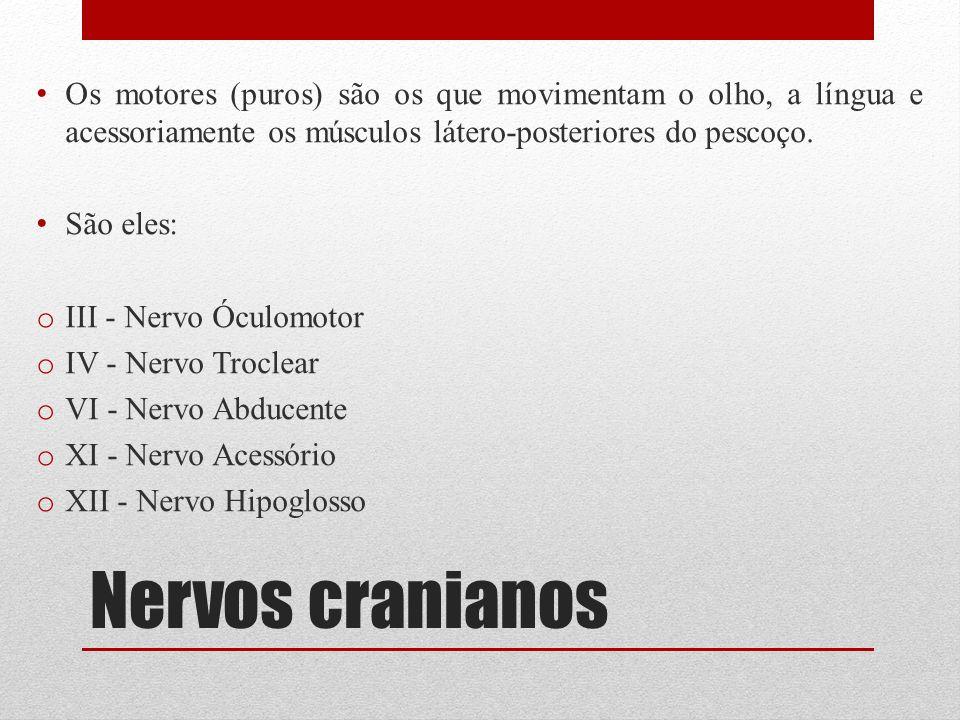Nervos cranianos Os motores (puros) são os que movimentam o olho, a língua e acessoriamente os músculos látero-posteriores do pescoço. São eles: o III