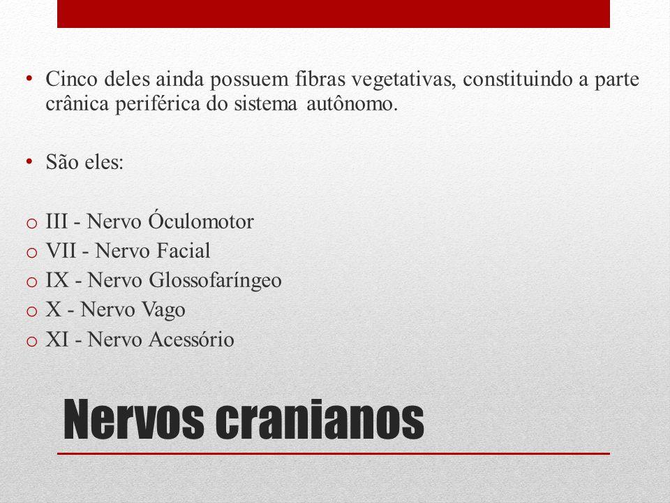 Nervos cranianos Cinco deles ainda possuem fibras vegetativas, constituindo a parte crânica periférica do sistema autônomo. São eles: o III - Nervo Óc