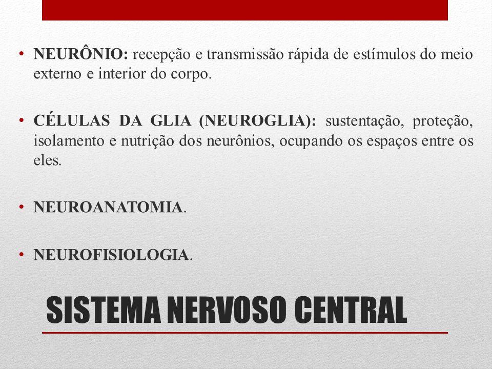 SISTEMA NERVOSO CENTRAL NEURÔNIO: recepção e transmissão rápida de estímulos do meio externo e interior do corpo. CÉLULAS DA GLIA (NEUROGLIA): sustent