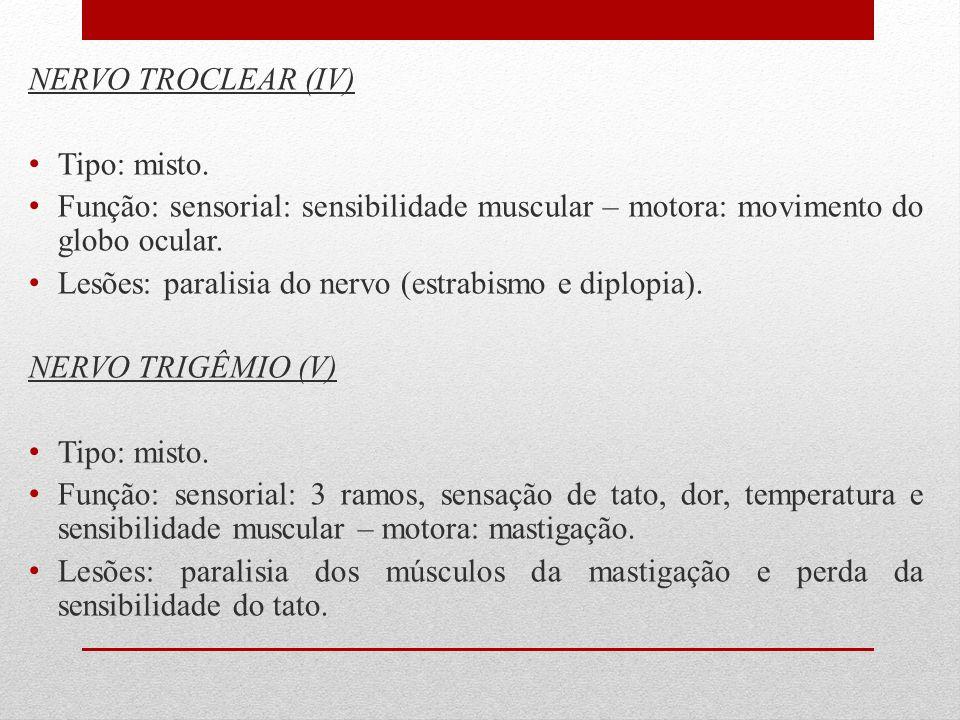 NERVO TROCLEAR (IV) Tipo: misto. Função: sensorial: sensibilidade muscular – motora: movimento do globo ocular. Lesões: paralisia do nervo (estrabismo