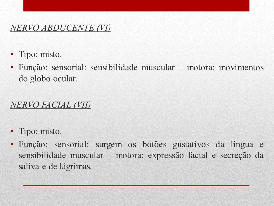 NERVO ABDUCENTE (VI) Tipo: misto. Função: sensorial: sensibilidade muscular – motora: movimentos do globo ocular. NERVO FACIAL (VII) Tipo: misto. Funç