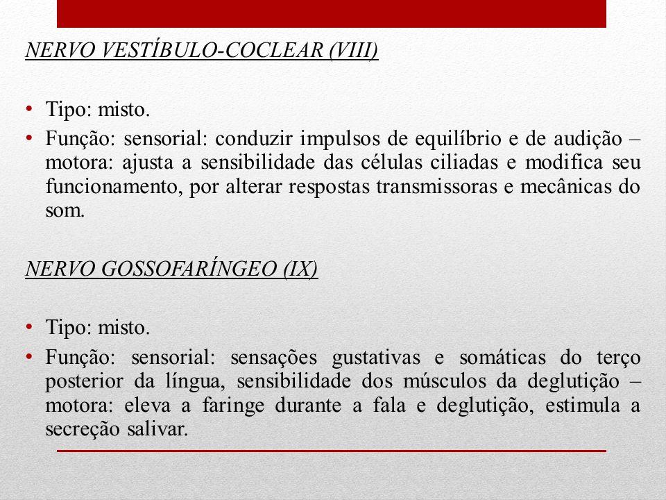 NERVO VESTÍBULO-COCLEAR (VIII) Tipo: misto. Função: sensorial: conduzir impulsos de equilíbrio e de audição – motora: ajusta a sensibilidade das célul