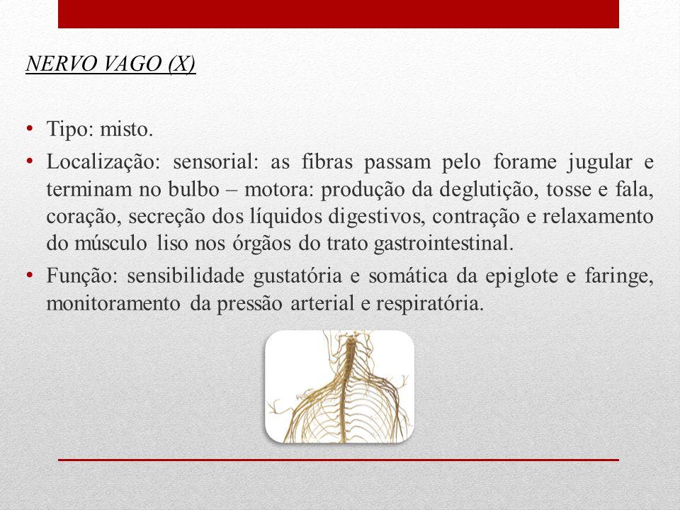 NERVO VAGO (X) Tipo: misto. Localização: sensorial: as fibras passam pelo forame jugular e terminam no bulbo – motora: produção da deglutição, tosse e